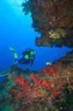 Diver, Coral-lined Arc, Beqa Island, Fiji
