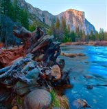 Tree roots in Merced River in the Yosemite Valley