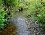 Prairie Creek, California