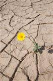 Single Flower Around Mud Patterns