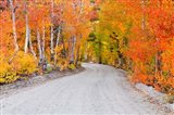 Autumn In The Inyo National Forest