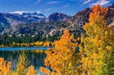 Golden Fall Landscape At June Lake