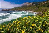 Wildflowers Above Sand Dollar Beach
