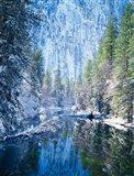 Winter trees along Merced River, Yosemite Valley, Yosemite National Park, California