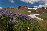 Wildflowers On Cinnamon Pass