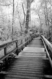 Big Bend Board Walk, Florida (BW)