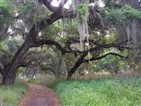 Trail Beneath Moss Covered Oak Trees, Florida Florida