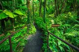Boulder Creek Trail, Hawaii