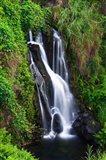 Cascade On The Hamakua Coast, The Big Island, Hawaii