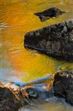 Abstract River, Acadia National Park, Maine