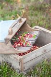 Cranberries And Scoop, Massachusetts
