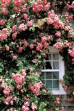 Massachusetts, Nantucket Island, Roses and home