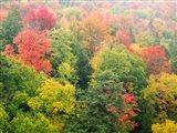 Forest Above The Cut River Bridge, Michigan