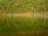 Conifer Forest Reflects In Kintla Lake, Montana