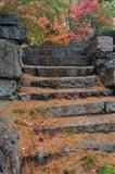 Pine needles, White Mountain Forest, New Hampshire