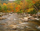River flowing trough Forest in Autumn, White Mountains National Forest, New Hampshire