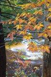 Stream and Fall Foliage, New Hampshire