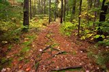 New Hampshire, White Mountains, Forest Path