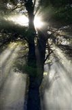 New England, New Hampshire, Sunlight Through Trees