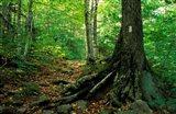 White Blaze Marks Appalachian Trail, White Mountains, New Hampshire