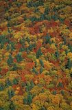Fall Foliage on the Slopes of Mt Lafayette, White Mountains, New Hampshire