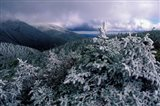 Snow Coats the Boreal Forest on Mt Lafayette, White Mountains, New Hampshire