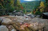Fall Foliage, Appalachian Trail, White Mountains, New Hampshire
