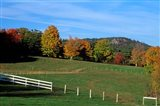 Horse Farm in New England, New Hampshire