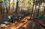 Stone Wall, Nature Conservancy Land Along Crommett Creek, New Hampshire
