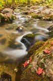 A stream in fall, Grafton, New Hampshire