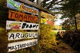 A farm stand, Holderness, New Hampshire