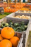Pumpkins and gourds at the Moulton Farm, Meredith, New Hampshire