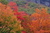Bemis Falls Trail, Crawford Notch State Park, New Hampshire