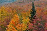 Autumn at Flume Area, Franconia Notch State Park, New Hampshire