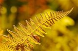 New Hampshire, Fern frond flora