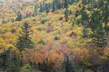 New Hampshire, White Mountains, Crawford Notch, fall foliage by Mount Washington