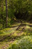 Overgrown Abandoned Rail Line, North Carolina
