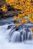 Rogue River Waterfalls In Autumn, Oregon