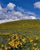 Rowena Plateau Landscape, Oregon