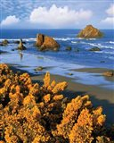 Rocky Coastline Of Oregon