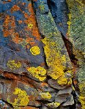Lichen Covered Basalt Rock, Oregon