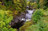 Wilson River Landscape, Oregon