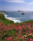 Ocean Landscape Of Goat Rock And Sweet Peas, Oregon