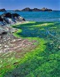 Rock Formations And Algae At Seal Rock, Oregon