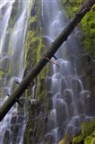Proxy Falls Over Basalt Columns, Oregon