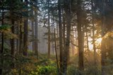 Sunset Rays Penetrate The Forest In The Siuslaw National Forest