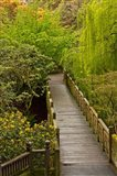 Bridge At Crystal Springs Rhododendron Garden, Portland, Oregon