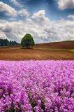 Willamette Valley Of Oregon
