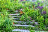 Summer Flowers On Stairs In Pennsylvania