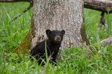 Black Bear Cub Next To A Tree
